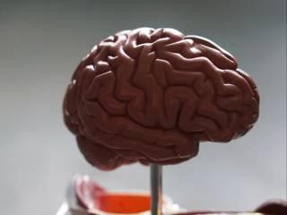 Ученые вырастили фрагмент мозга при помощи специального принтера