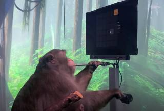 «Скоро на Twitch и Discord»: Маск опубликовал видео с обезьяной, играющей в известную видеоигру силой мысли