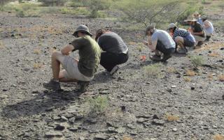 У берегов Кении найдены самые древние останки человеческого рода