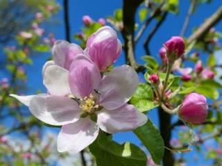 Украинцам напомнили, сколько мы будем отдыхать на майские праздники