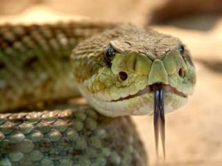 В Харькове змеи держат в страхе жителей двухэтажки