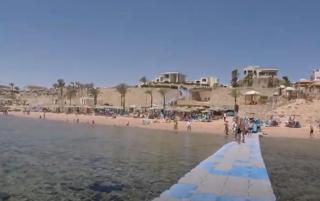 На популярном египетском курорте у самого берега плавала акула