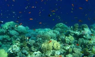 Установлен возраст Красного моря