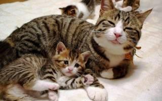 На Харьковщине живодер задул монтажной пеной кошку с котятами