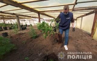 Бывшие зэки наладили бизнес по выращиванию конопли на полмиллиона гривен