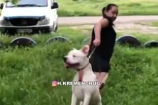 В Кременчуге бойцовский пес набросился на велосипедистку