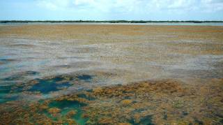 Исследователи нашли подтверждение существования «мертвых зон» в океане