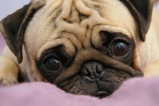 Украинцам запретили ввозить собак в США: стала известна причина