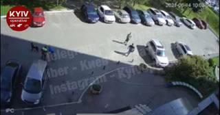 В Киеве ротвейлер разорвал щенка и покусал подростка