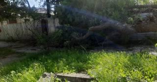 На Хмельнитчине посреди города дерево рухнуло на подростка