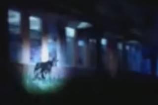 Появилось видео, как румынский курорт… атаковали медведи