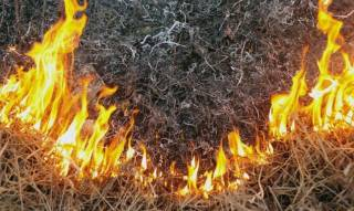 Украинцев пугают пожарами из-за сильной жары