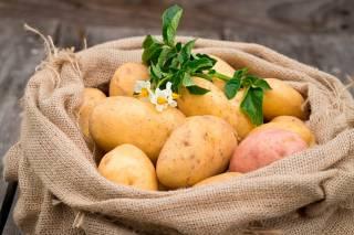 Стало известно, чем полезен картофель