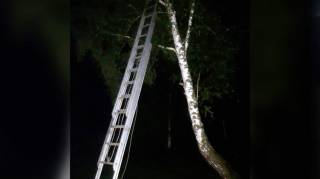 На Львовщине 8-летний мальчик, убегая от буллинга, забрался на березу на высоту 8 метров