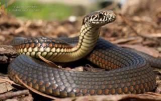 На Львовщине змея отправила в реанимацию ребенка