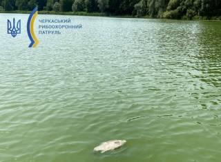 В Черкасской области зафиксирована массовая гибель рыбы