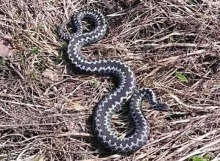 На Львовщине за день змеи уложили на больничную койку двоих детей