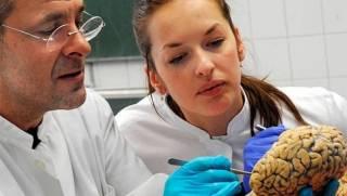 Названы основные причины уменьшения человеческого мозга