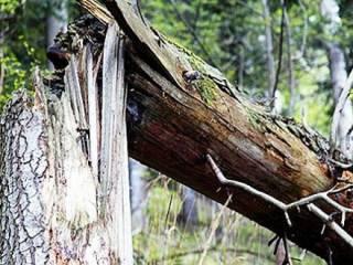 Во Львове упавшее дерево убило парня и девушку