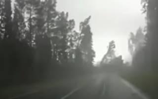 Появилось видео, как ветер с корнем вырывал деревья в Беларуси