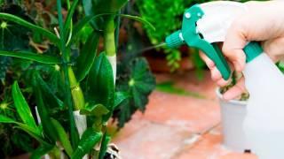 Домашние растения – украшение жилого помещения