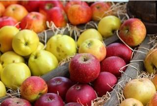 Универсальный фрукт. Что надо знать о яблоках