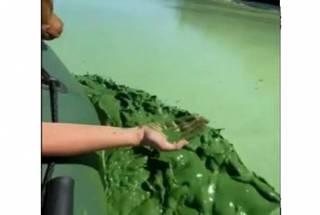Дохлая рыба и вонь: очевидцы засняли катастрофическое состояние Днепра