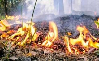 Украинцам рассказали, в каких областях сохраняется пожарная опасность