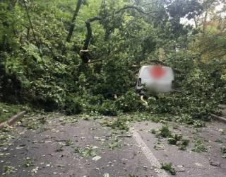 В Киеве дерево упало прямо на двигающийся автомобиль