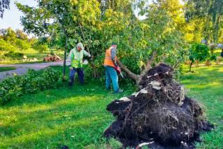 «Жертвами» урагана в Киеве стали сотни деревьев