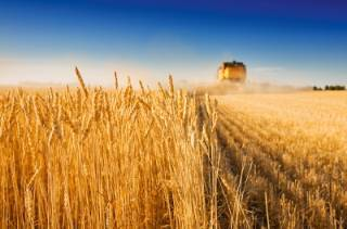 В Украине собрали самый большой урожай зерна за всю историю