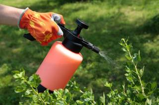 Как подобрать нужные средства защиты растений?