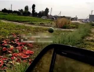 В Сети появилось видео, как херсонские фермеры уничтожают арбузы