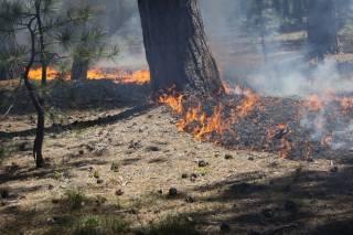 Почти всей территории Украины угрожают пожары