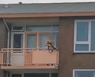 Полуголый житель городка в Нидерландах устроил охоту на людей из арбалета