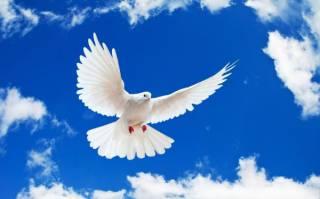 Международный день мира: какой праздник отмечается 21 сентября 2021 года