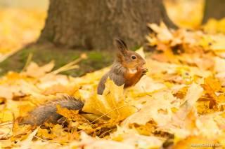 В Киеве официально наступила осень
