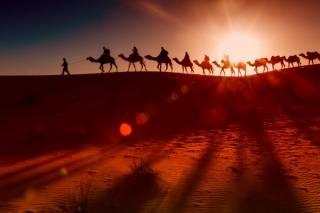 Международный день караванщика: какой праздник отмечается 24 сентября 2021 года