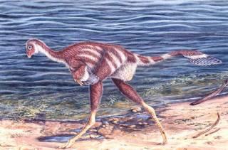 Китайские ученые нашли в хорошо сохранившихся останках динозавра кое-что любопытное