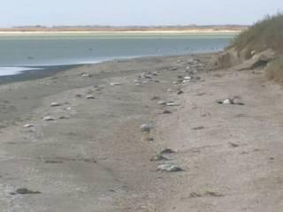 Побережье аннексированного Крыма усеяли тысячи мертвых птиц