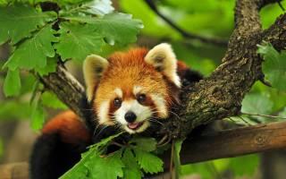 Всемирный день животных: какой праздник отмечается 4 октября 2021 года