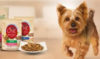 Чим краще годувати собаку маленької породи?