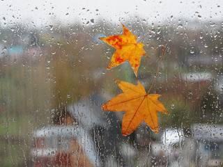В начале следующей недели Украину накроют холодные дожди