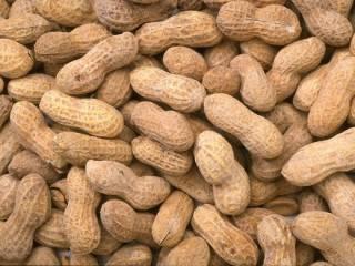 Стало известно, как арахис влияет на мозг