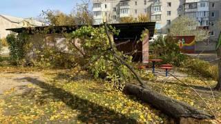 В Кременчуге умерла девочка, на которую в детсаду упало дерево