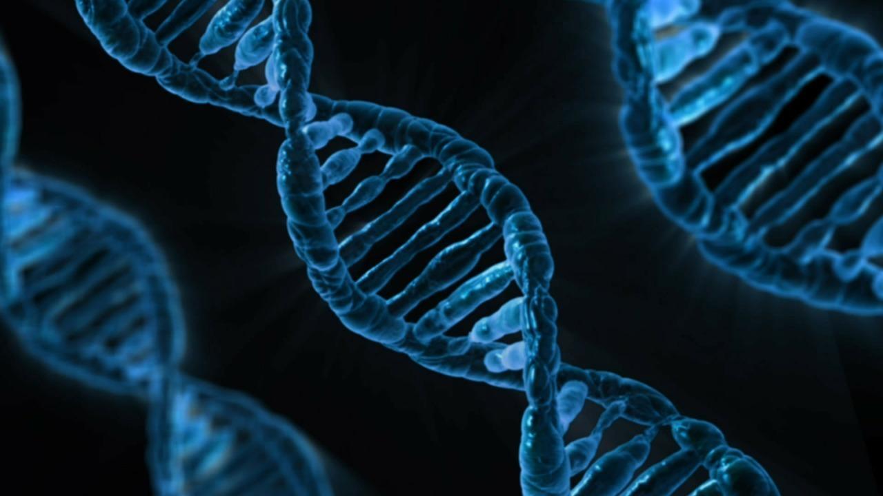 В наших генах присутствует ДНК архаичных людей неизвестного вида