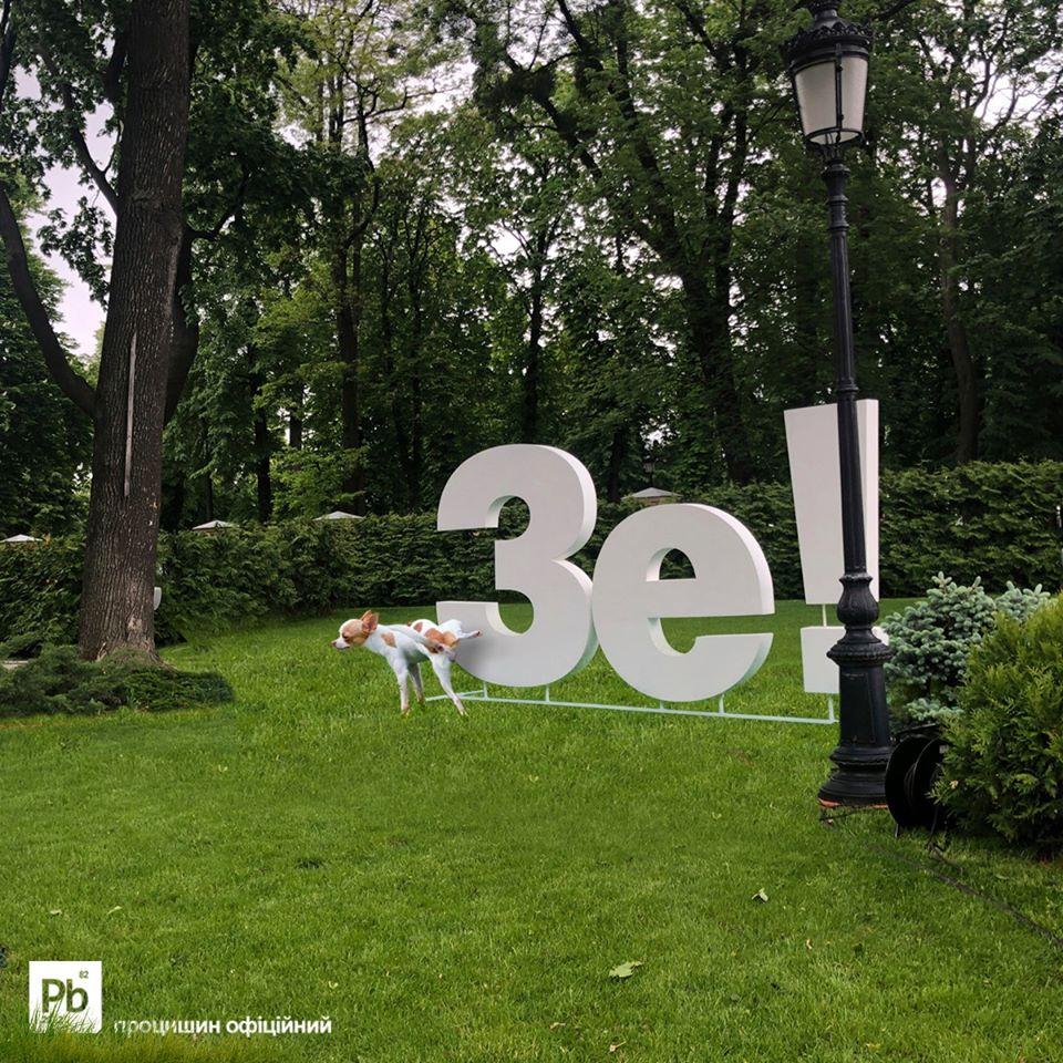 Фотография писающей собаки во время пресс-конференции Владимира Зеленского